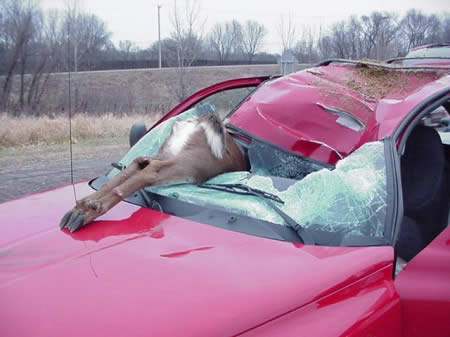 Accidents involving wild animals can and do happen in Italy