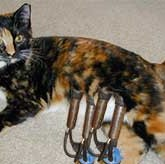 A Cat Being Milked