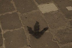 Can You Guess Where this Footprint can be Found in Italy?