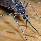 How to Avoid Mosquitoes – the Bane of Italy's Summers