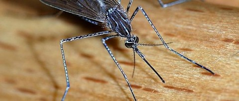 Avoid mosquitoes in Italy - or they will get you - unless you repel them