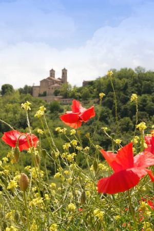Le Marche Poppies