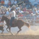 Italian Rogue of the Week – Rodeo Loving D.S.