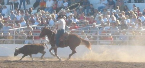 Publicly Funded Rodeo?