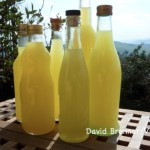Christmas? Limoncello Time! Here are Two Limoncello Recipes.