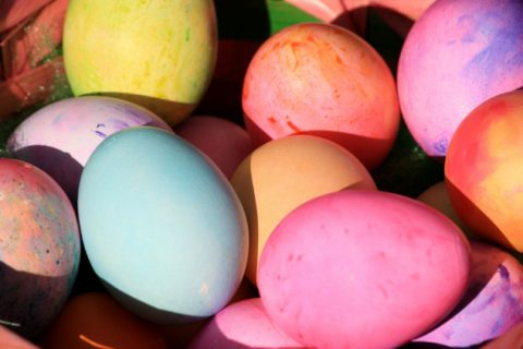 Colored Chocolate Eggs Laid by Genetically Modified Chickens